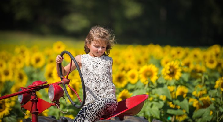 Worth The Trip – Fausett Farm Sunflowers