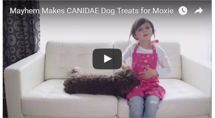 In the Kitchen with Mayhem + CANIDAE (for Moxie!)